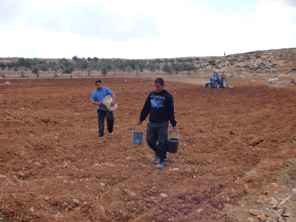 Palestinians plowing nearby Havat Ma'on illegal Israeli outpost on November 21.
