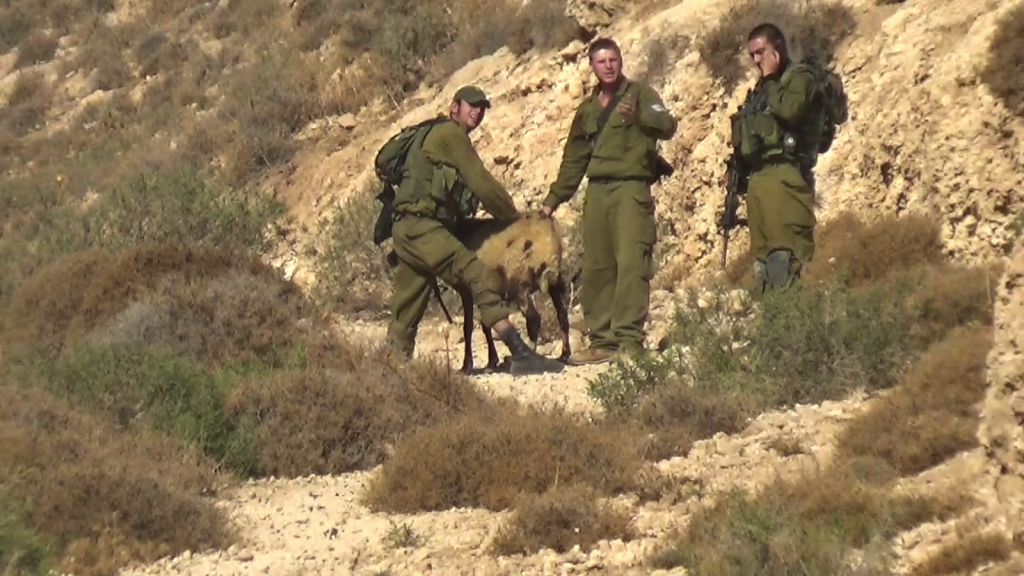 Soldiers confiscating one sheep