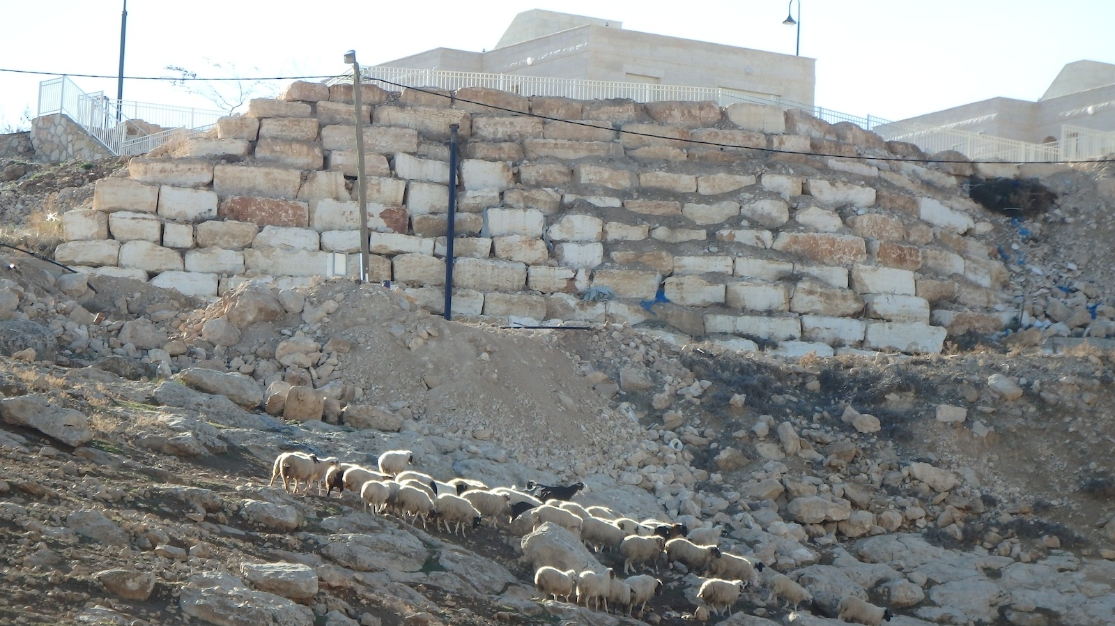 Palestinian sheep cross the poisoned land in Umm Al Kheir village
